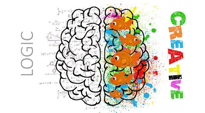 não trái và não phải